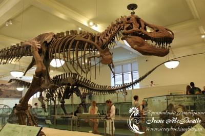 Музей естественной истории в Нью-Йорке