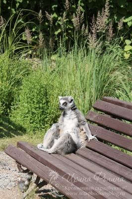 Поездка в Чехию: лемур в зоопарке