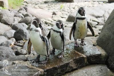 Поездка в Чехию: пингвины в зоопарке